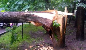 дерево падіння