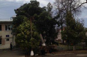дерево Косів буревій