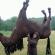 На Прикарпатті шукають злочинця, який хотів викрасти коня