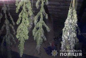 Житель Прикарпаття вирощував у лісі наркотичні рослини (ФОТО)