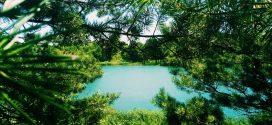 На Рівненщині є озеро із «смарагдовою» водою (ФОТО)