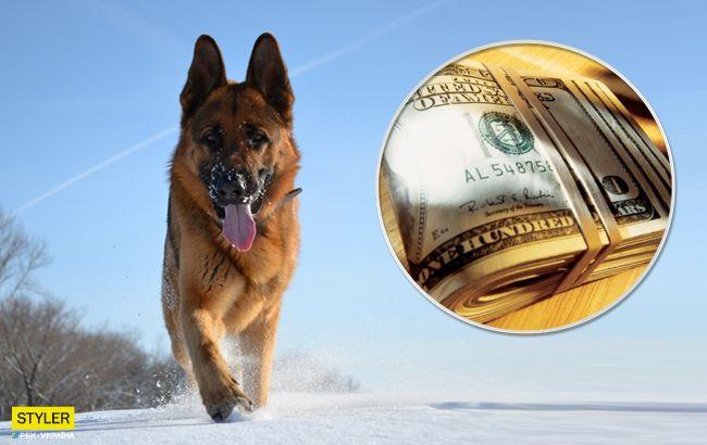 собака, гроші