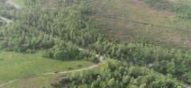 На Житомищині потужний буревій за лічені хвилини повалив 100 гектарів лісу (ВІДЕО)