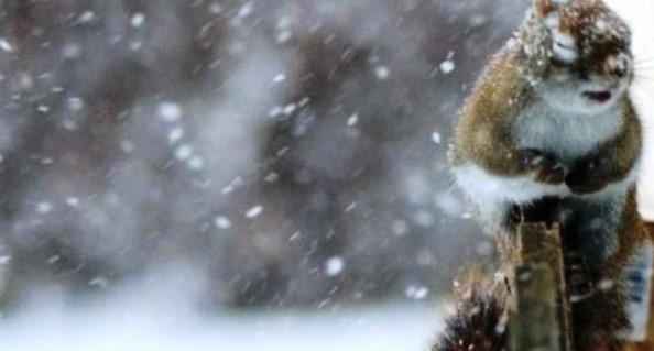 дощ і мокрий сніг