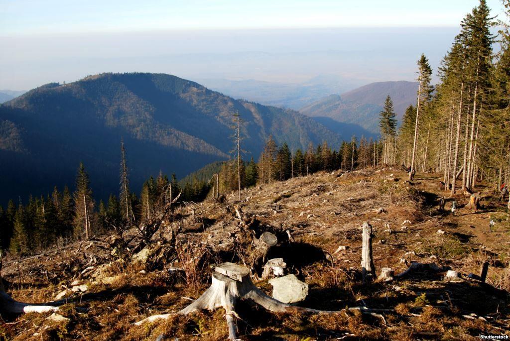 вирубка лісу у Карпатах