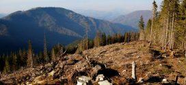 Екологи б'ють на сполох – під виглядом збереження лісів Рада спростила вирубку Карпат