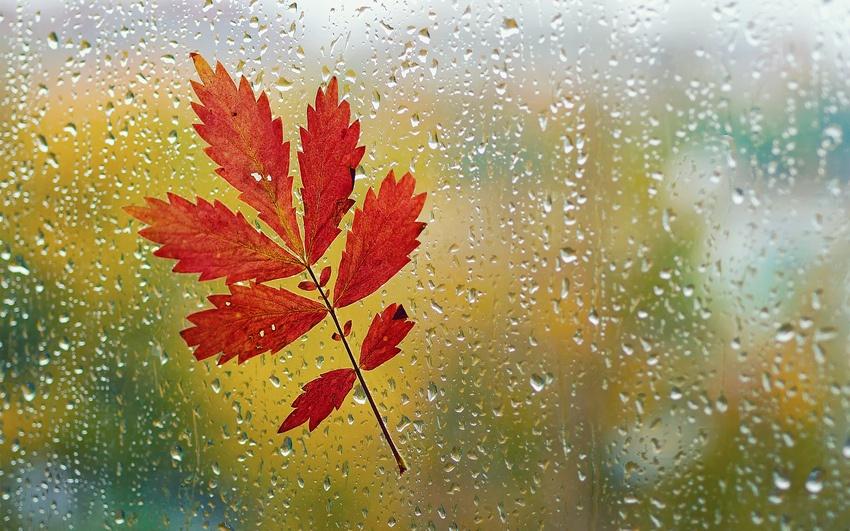 погода, осінь, дощ