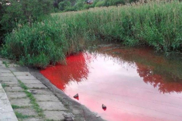 червона вода у річці