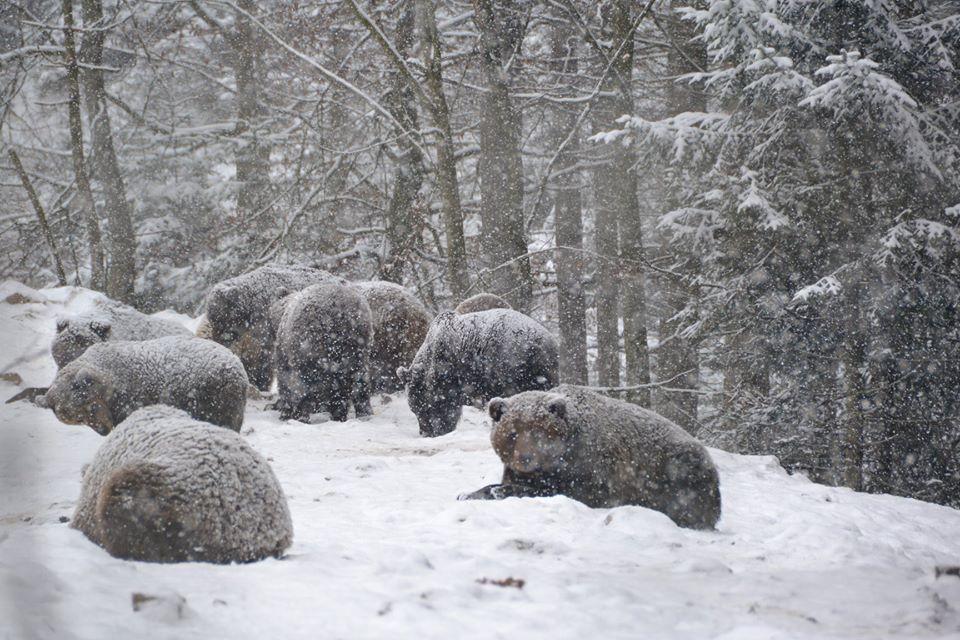 ведмеді зима