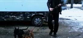 У Франківську чоловік до закинутого автомобіля прив'язав двох бійцівських собак (ФОТО)