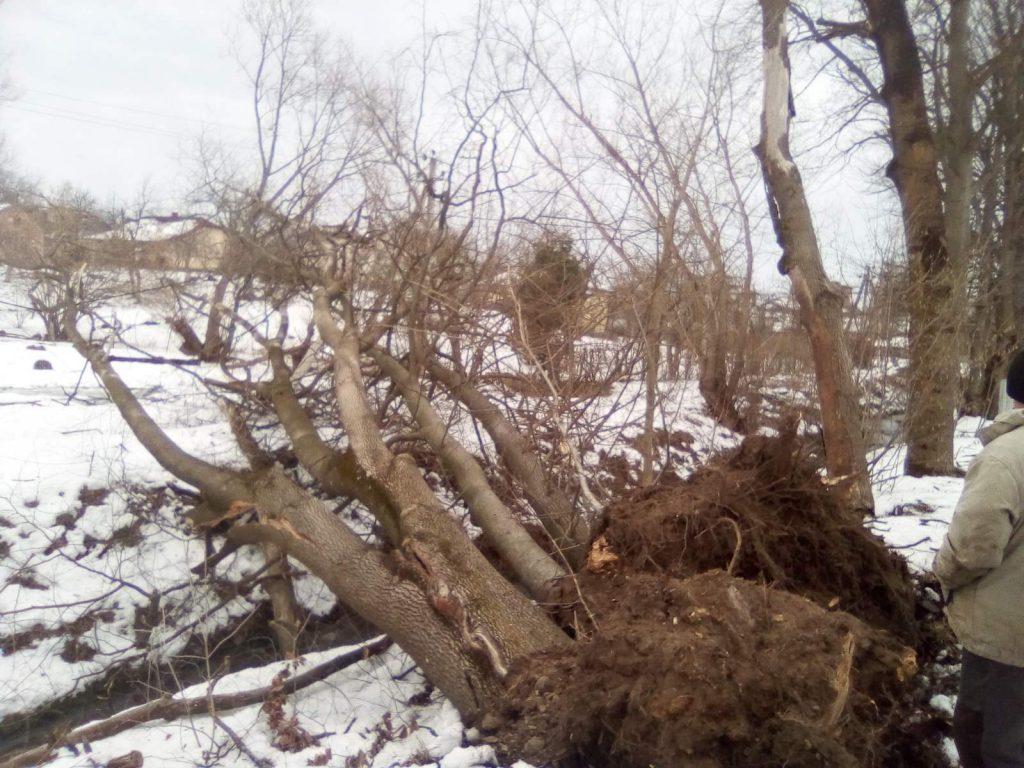 Долина вітер валить дерева