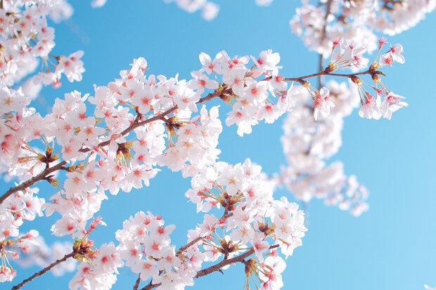 весна потепління