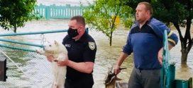 <strong>Потоп у Лісному Хлібичині: на Прикарпатті залило водою дорогу Н-10 Стрий-Чернівці (ФОТО)</strong>