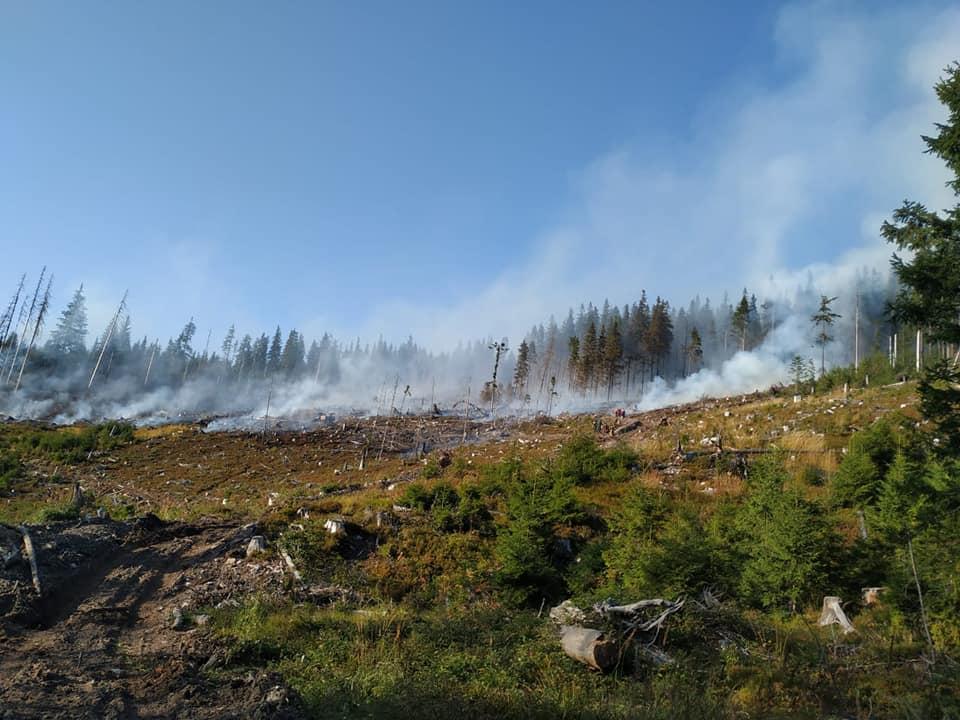ліс горить, гори димлять
