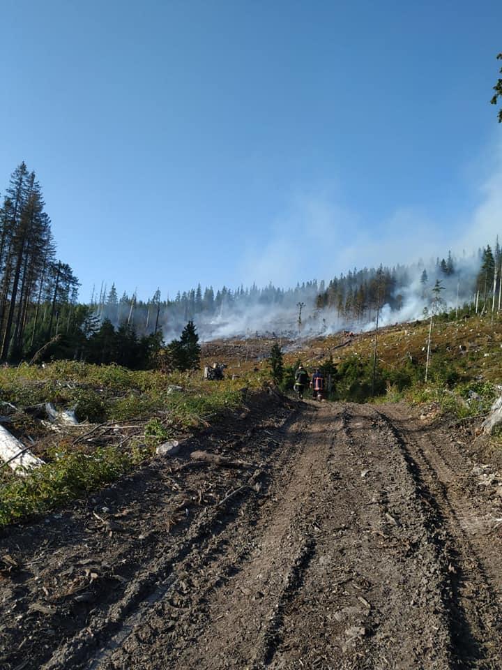 ліс горить, Мислівка