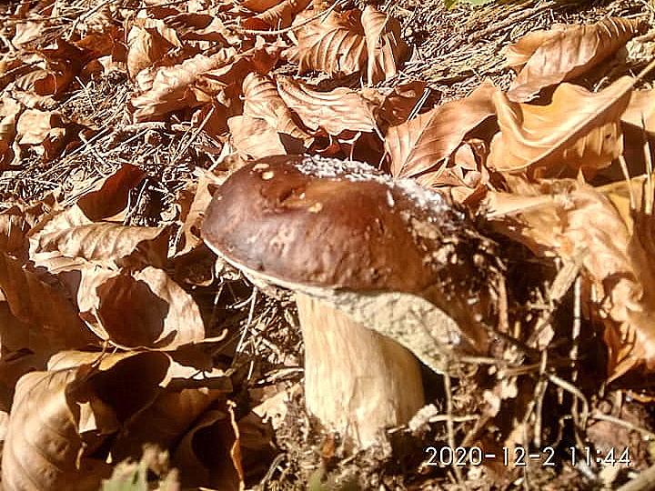 гриби серед зими
