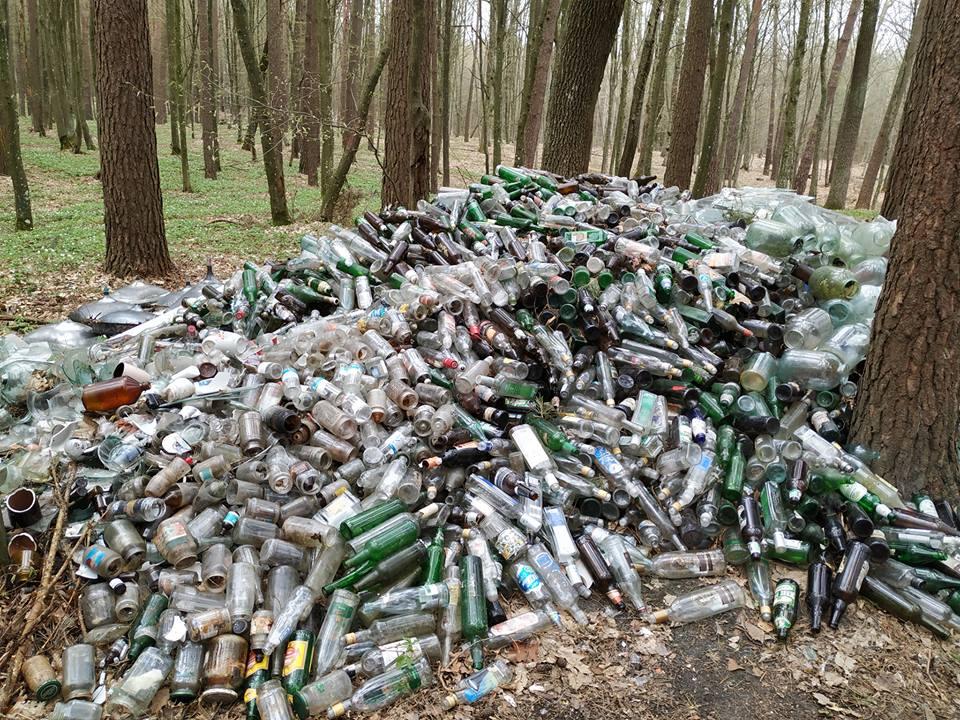 На Прикарпатті у лісі люди зібрали понад 4 тонни склотари (ВІДЕО)