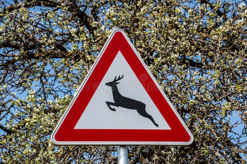 дорожній знак Дикі тварини