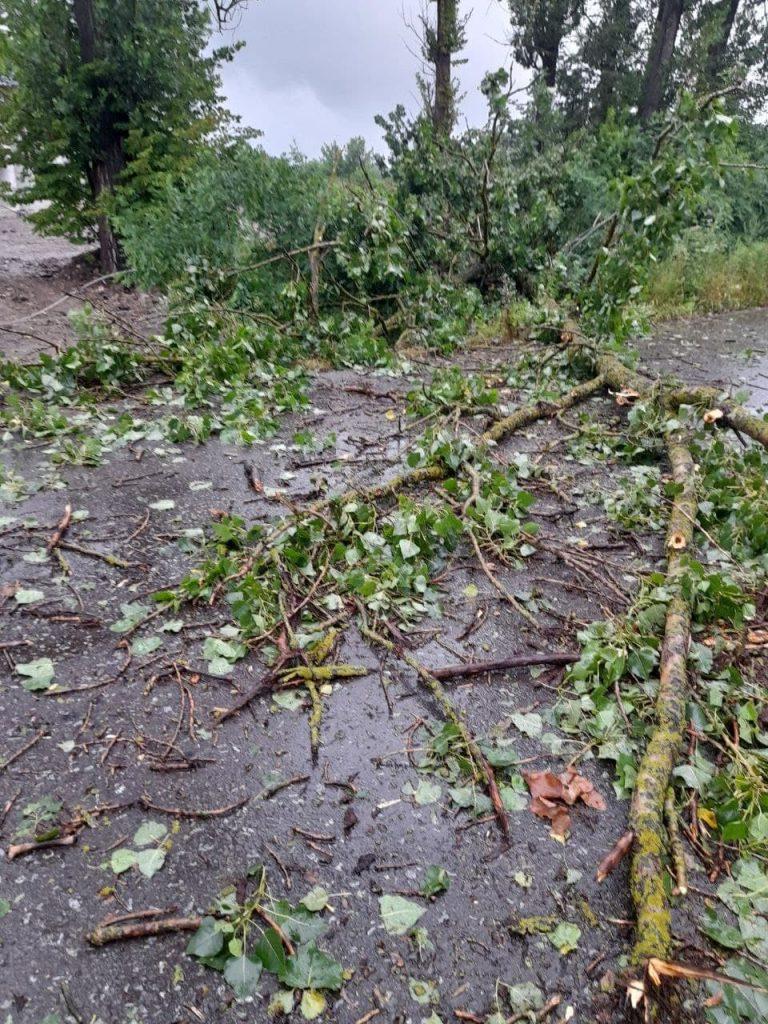 коломийські новини, повалені дерева